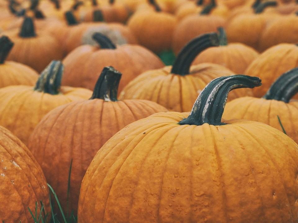 Benessere Femminile agriculture-1868074_960_720 Settembre, mangiare sano: l'arrivo dell'autunno con zucca, cicoria e porri